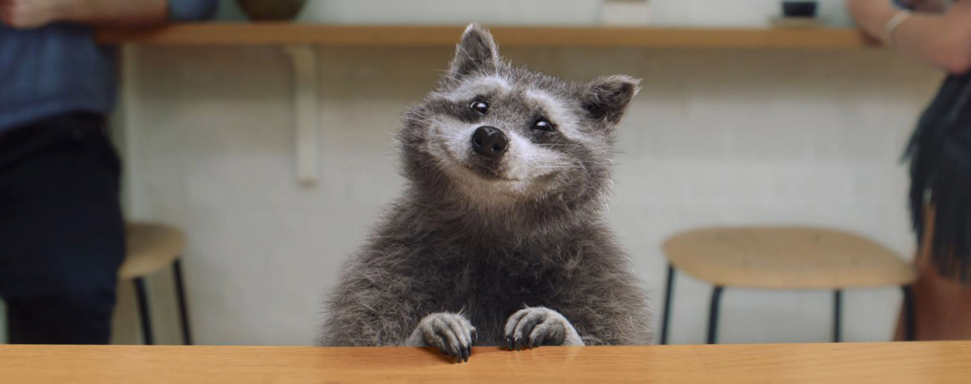 Raccoon for Thumbnail